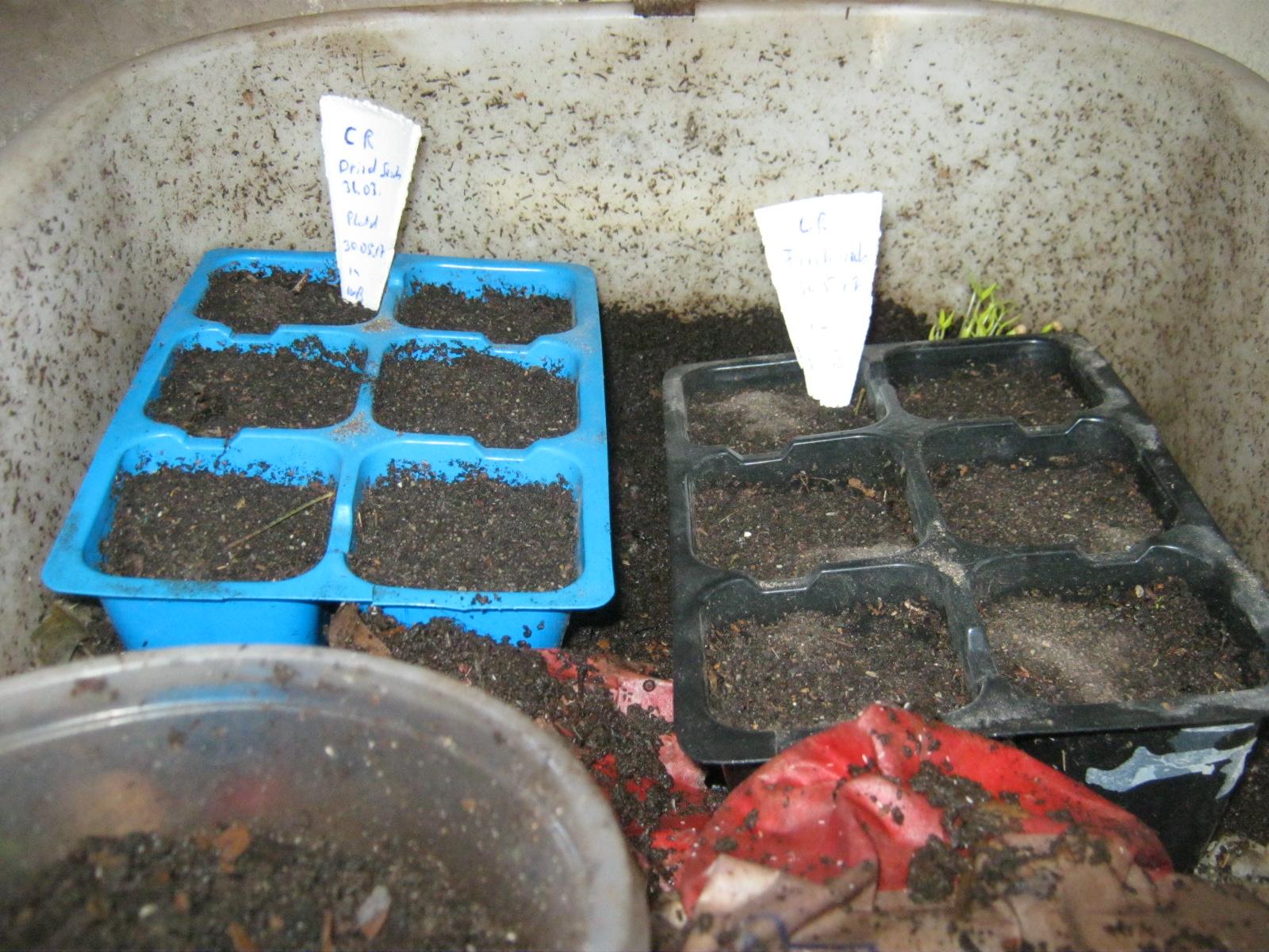 2 six packs with Carolina Reaper seeds in Worm bin