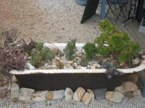 A bathtub with succulents.