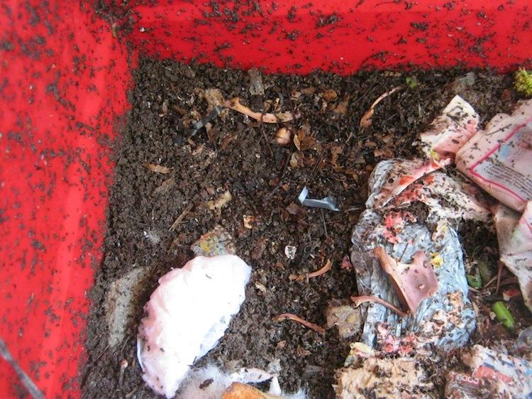 The same worm bin 5 days later
