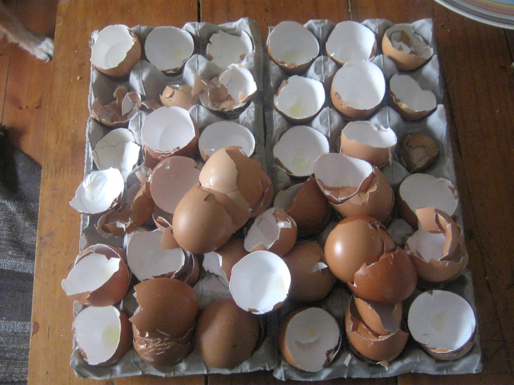 Cracked egg shells on egg cartons to be processed to worm food