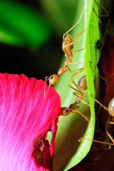 Protect Worms From Ants