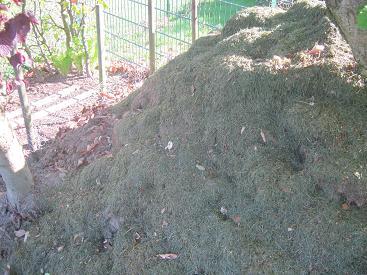 Ein simpler Komposthaufen bestehend aus Gras und Laub