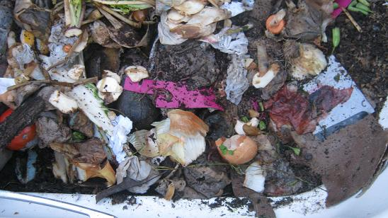 Kitchen scraps can get recycled with earthworms