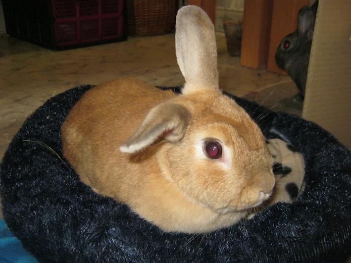 2 dwarf rabbits