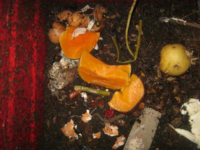 Some butternut serves as worm food