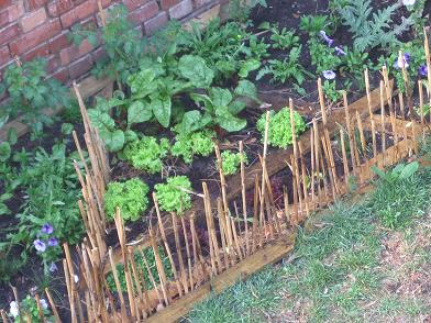 One of the advantages of a square foot garden is that the plants are growing closely together and forming in this way a micro climate and protect the soil from drying out to quickly.