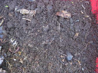 In dem unteren Bild ist der Kot nach kurzer Zeit komplett von den Würmern konsumiert worden