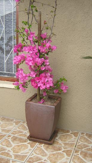 A lovely way to implement container gardening is in a decorative clay pot with a flower on a terrace.