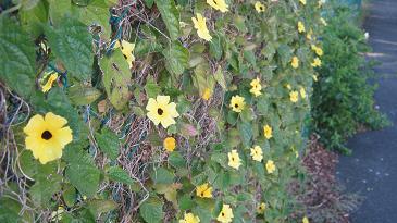 Blumen an einem Maschendrahtzaun.