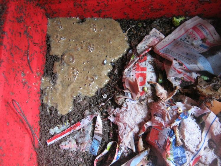 Snail sludge in the worm bin
