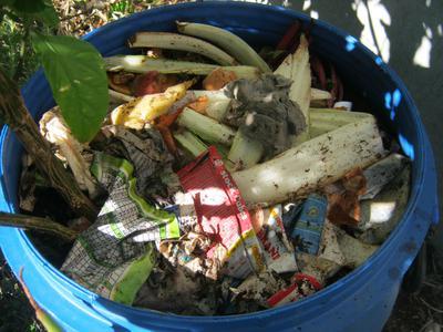 Kitchen waste in Carolina Reaper pot
