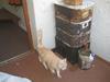 industrial espionage.....inspection of worm bin