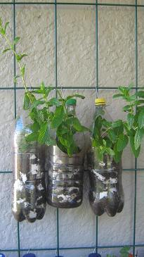 Recycled bottles with herbs hanging on a trellis.
