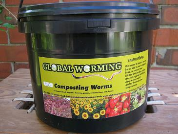 Compost worms for sale