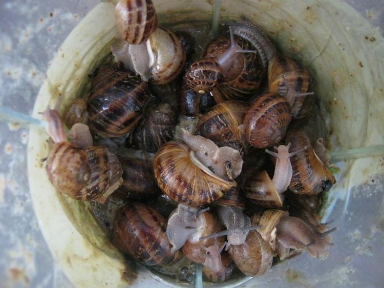 Snails in a grinder