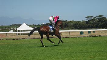 Ein Rennpferd bereitet sich auf den Start vor.