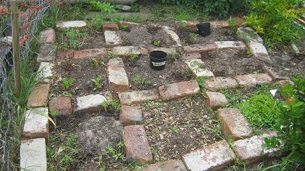 This garden is divided into 9 square feet and has  been planted with several kinds of  tomato plans, Swiss chard and herbs.