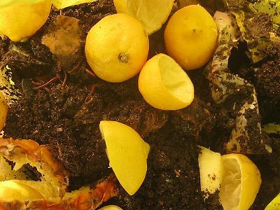 Zitronenschalen in einer Wurmfarm