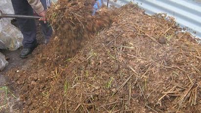 Das fermentierte Material wird sehr schnell auf einem  Komposthaufen in Kompost verwandelt.