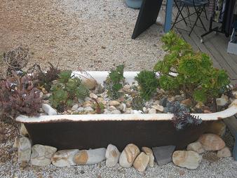 A bathtub with succulents.
