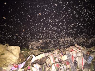 Mites in a worm farm