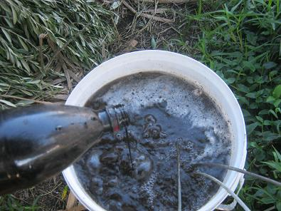 Molasses added into bubbling compost-tea.