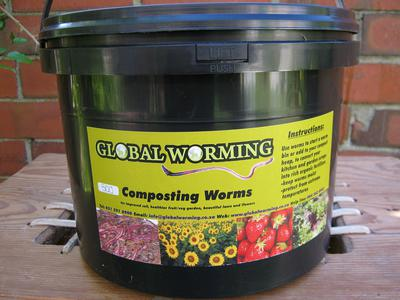 500 worms in a bucket with about 1 gallon of bedding.