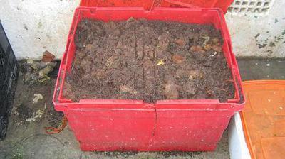 Dog poop worm bin with open lid