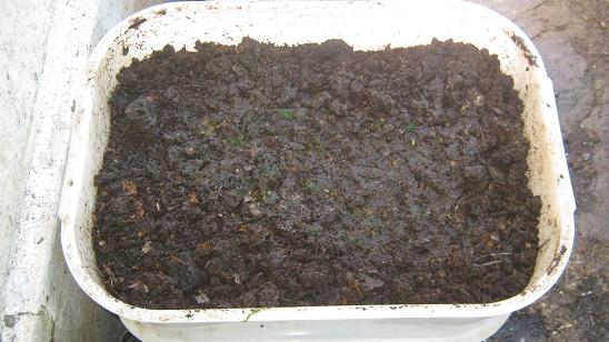 The middle bin of 3 tier worm farm with worm castings.