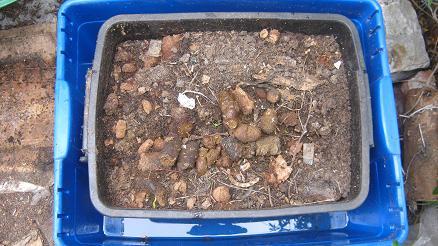 Eine Wurmfarm Insel gibt Ameisen keine Chance.